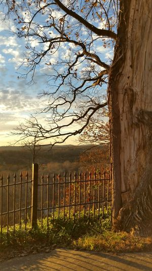 Tree Sunlight Sunset Sky Nature Outdoors No People Beauty In Nature Day Fence Golden Hour Ozark Sunset Cloud And Sky This Week On Eyeem Smartphonephotography Branson, Missouri College Of The Ozarks