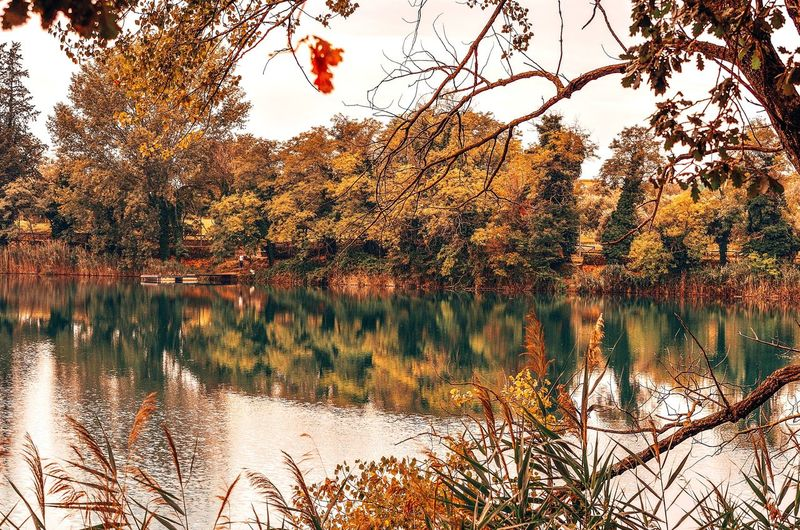 Autumn colors. Lake Telese, Campania, Italy Autumn colors Autumn🍁🍁🍁 Fall Beauty Park Lake Lake View Lakeshore Telese Beauty In Nature Nature Italy Italia Campania Tree Area Tree Water Backgrounds Sky Close-up Leaves Plant Life Change Botany Fallen Leaf Blossom Autumn Fallen Leaf Fall Leaf Vein