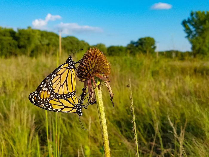 A new beginning. A New Beginning Flower Butterfly - Insect Perching Insect Summer Close-up Animal Themes Sky Grass Plant Animal Wing