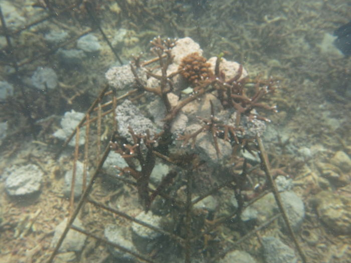 High angle view of dead plant in sea