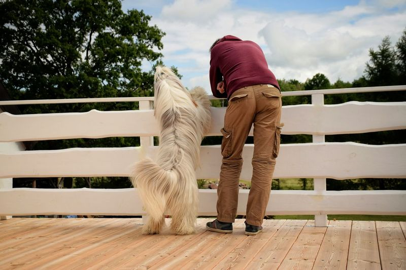Rear view of man and dog on railing