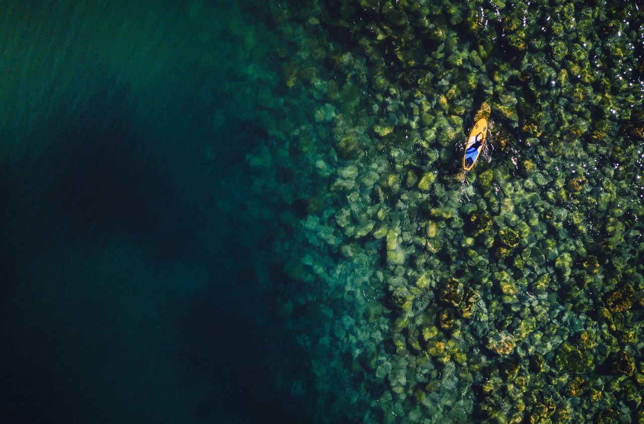 water, sea, nature, underwater, one person, high angle view, adventure, sport, day, animals in the wild, swimming, undersea, sea life, animal wildlife, leisure activity, animal, beauty in nature, exploration, outdoors, marine, underwater diving