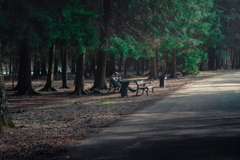 View of horse cart on road amidst trees in forest