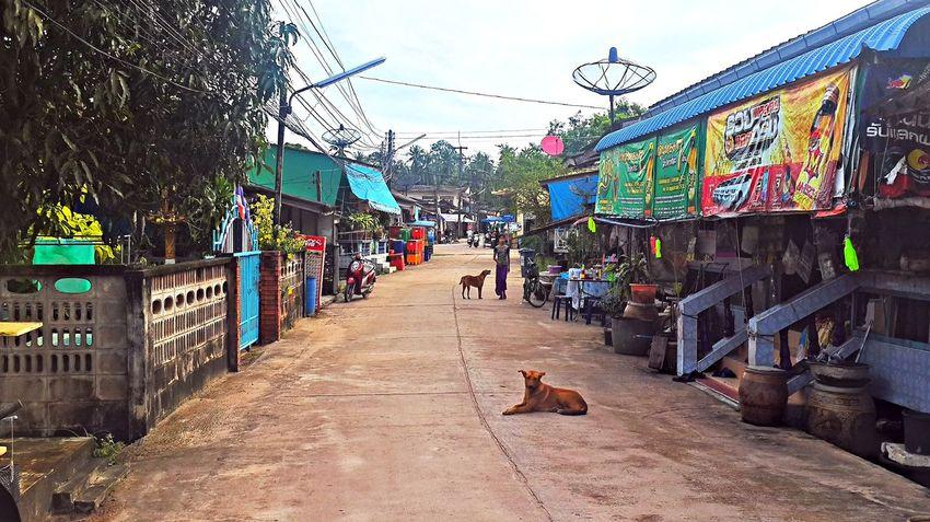 Pak Nam Lang Suan Village Chumphon Day Dog Fishing Village Outdoors Pak Nam Lang Suan Street Thailand Village View