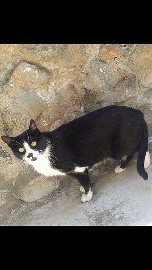 Sarı Göz No People Kedi Cat Siyahbeyaz Tüylü Merzifon Blackwhite Day