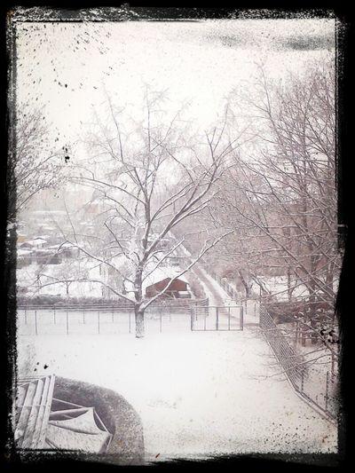 Schnee in