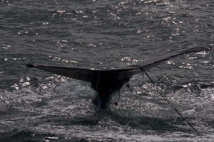 Iceland Reykjavik Tail Whale Watching