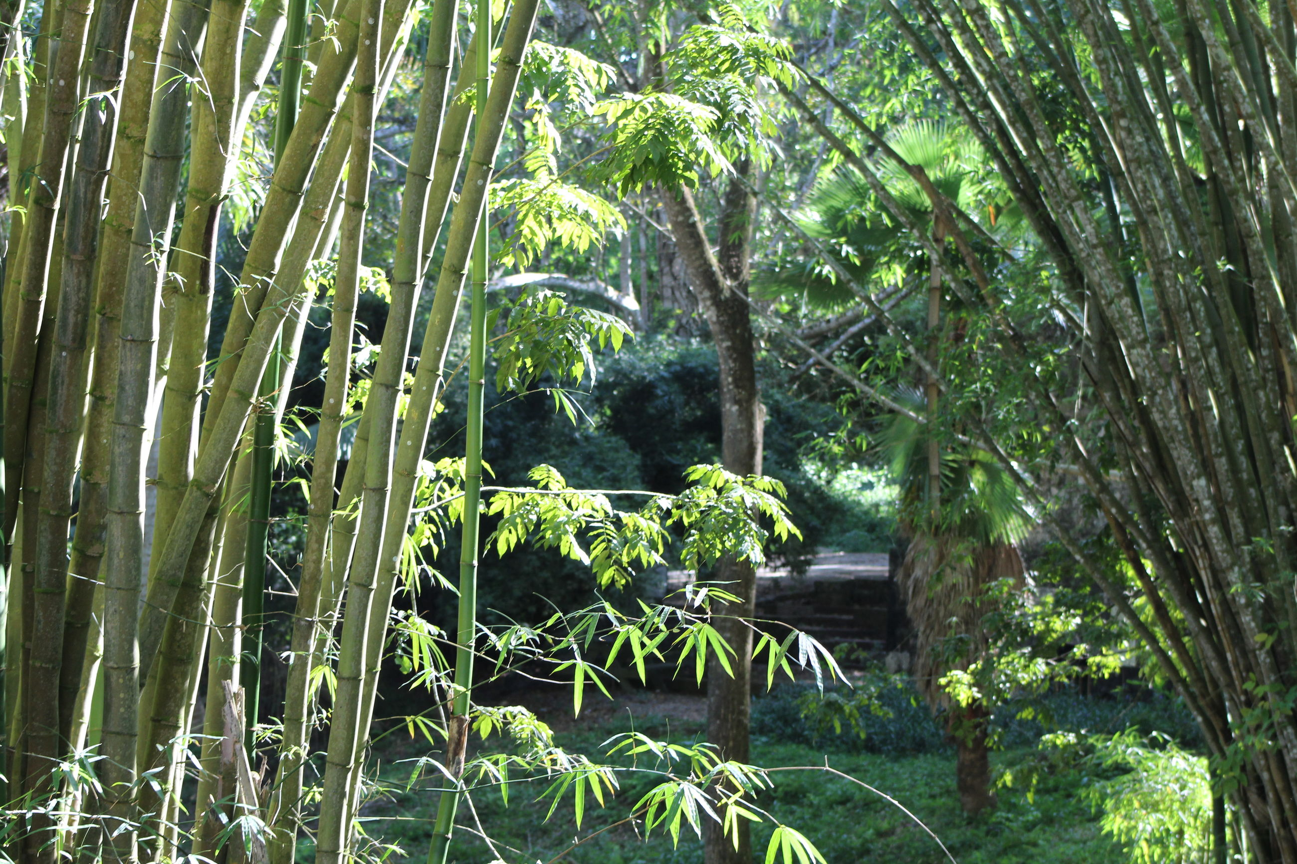 growth, nature, tranquility, green color, beauty in nature, tree, day, plant, outdoors, tranquil scene, no people, leaf, bamboo grove, scenics, bamboo - plant, forest, tree trunk