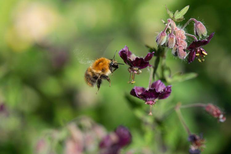 Busy bee Summer