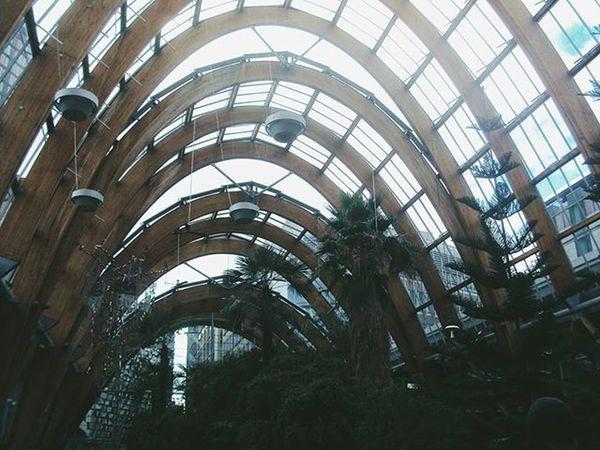 Sheffield Wintergarden Plant Plants Nature Film Filmphotography Filmisnotdead 35mmfilm 35mm