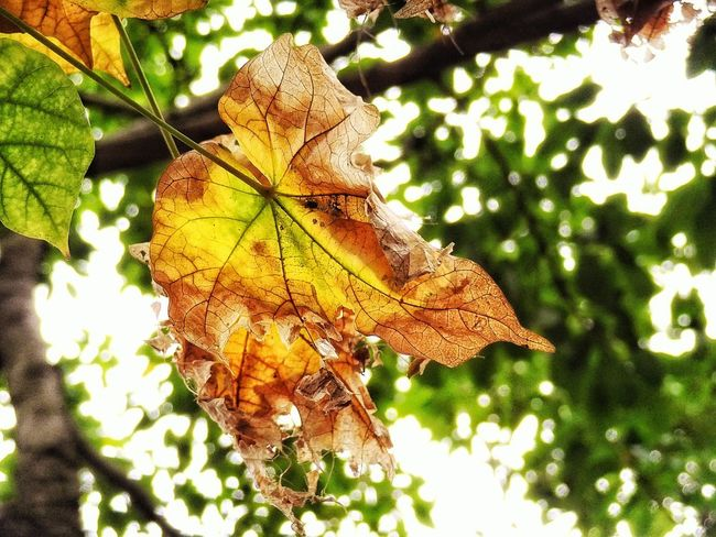 Check This Out :o:o:o Leaf 🍂 🌈⭐🌠🌍🌞 Close-up Beautiful ♥ Feel The Moment EyeEm Best Shots Sunlight Beauty In Nature Leaf