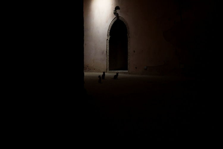 Meknès Cats Shadow Canon Canonphotography Morocco Meknès Animal Dark Confined Space EyeEmNewHere A New Perspective On Life Capture Tomorrow 2018 In One Photograph My Best Photo Streetwise Photography