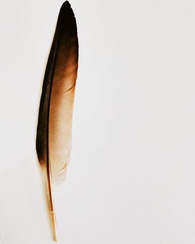 Has been writing Histories. Feather  Historical Legends Never Die Legend Mightierthanthesword Photography Photojournalism Silhouette_creative Creative Ideas Creative Indiapictures Oyeitsindia Oyemystory Oyemyclick Meraki Antasseries