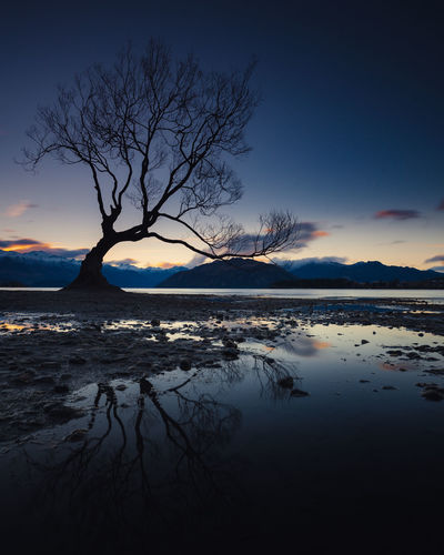 Wanaka Bare Tree Beauty In Nature Branch Idyllic Lake Nature No People Non-urban Scene Outdoors Plant Reflection Scenics - Nature Silhouette Sky Sunset Tranquil Scene Tranquility Tree Water