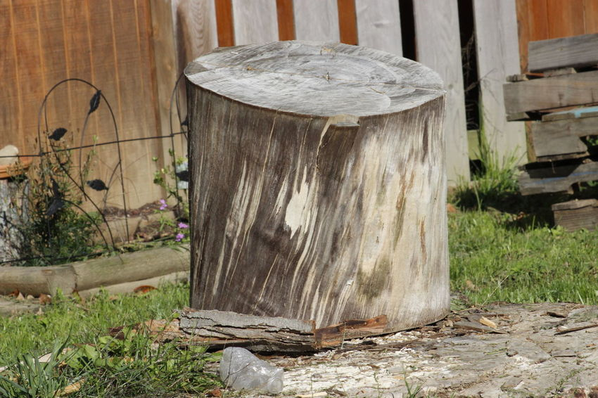 Damaged Day Destruction Growth Outdoors Tree Tree Trunk Weathered Wood Wood - Material