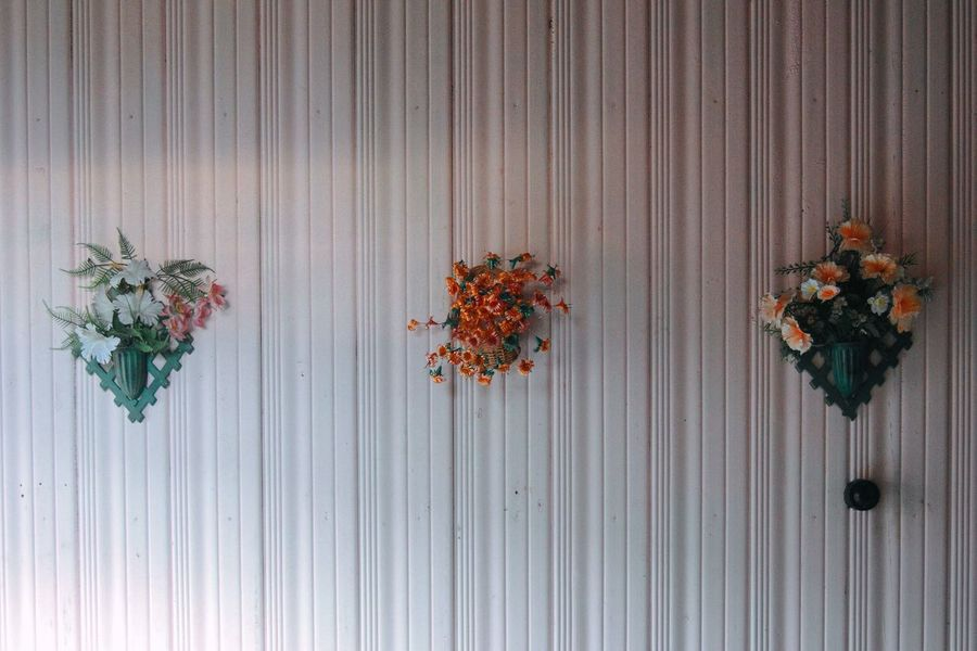 Close-up Corrugated Iron Day Dried Plant Flower Flower Head Fragility Freshness Nature No People Outdoors Plant Variation