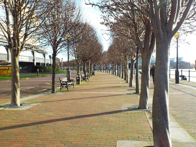 Quayside path Salford Quays Salford United Kingdom Trees The City Light