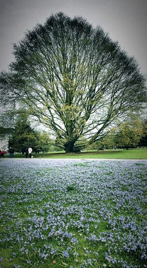 London Kew Gardens Taking Photos Walking Around Hello World No People London London London!!!