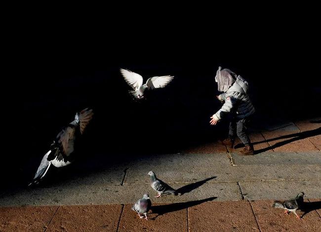 Bologna, Italy Light Shade Animal Themes Bird Fujifilm Fujifilm_xseries Fujixpro2 People Streetphotography