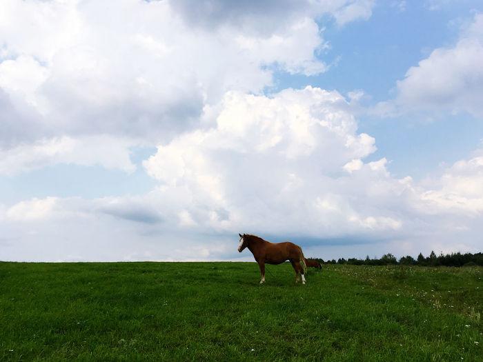 Mammal Cloud -