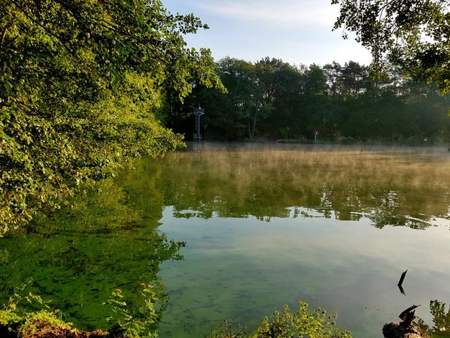 Beauty In Nature Nature Photography Nature_collection Enten Morning Light Morning Morgenstimmung See Seelandschaft Seascape Sealife Sea Nature Naturephotography Tree Water Lake Tennis Reflection Alligator Sky Reflecting Pool Reflection Lake