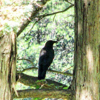 Blackbird BirdLovers Nuts_about_birds Igers_of_wv wv_igers westvirginia