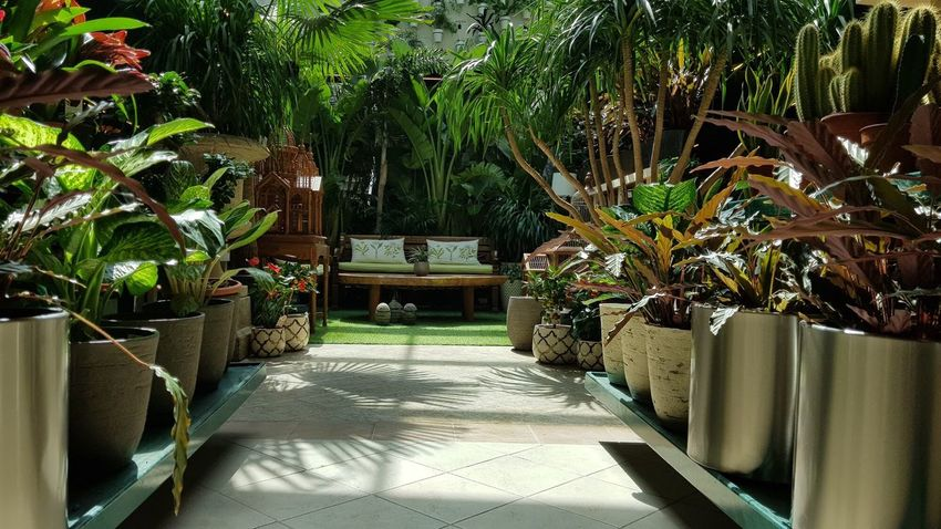 Walkway to my indoor garden with open sunroof Verticalgarden Vertical Roof Tile Leaves Sofa Openroof Flora Flowers Plants Gardening Indoorgarden Chair Palm Tree Luxury EyeEmNewHere Plant Day No People Flower