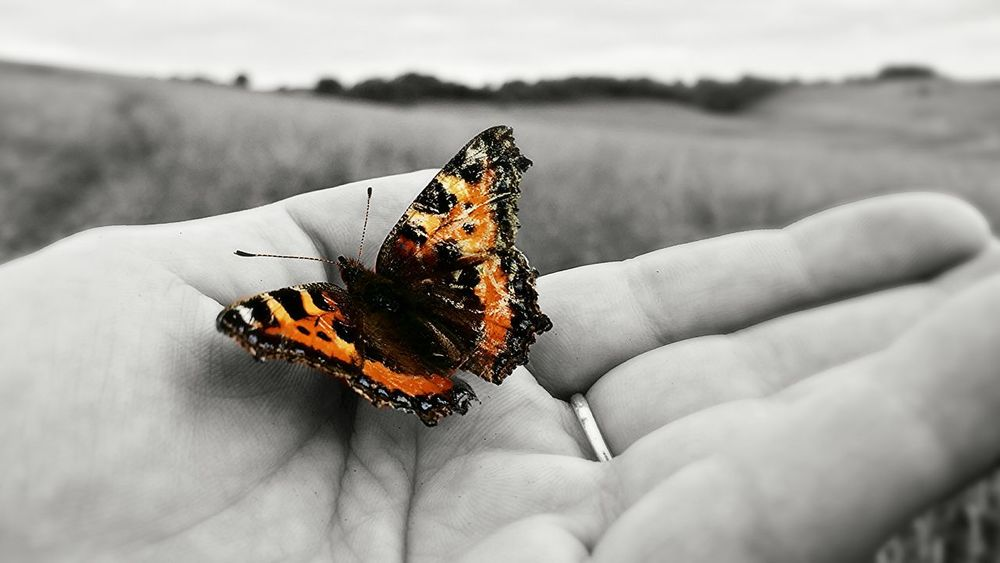 Made a fluttery little friend whilst out for a walk. Butterfly Butterfly - Insect Colour Color Blackandwhite Black And White Photography Colour Photography Color Photography Nature Nature Photography Outdoors Outdoor Outdoor Photography Colour Of Life