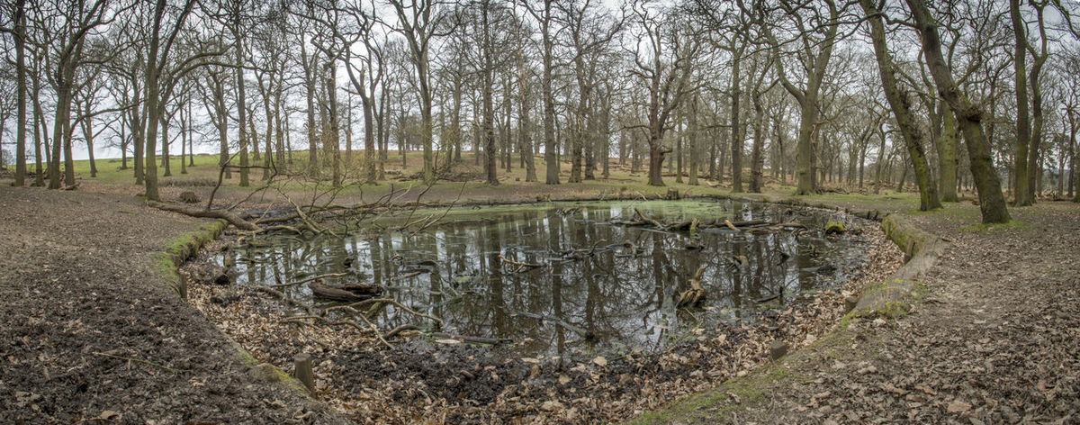 Colour No People Outdoors Panoramic Park Reflection Richmond Richmond Park, London Swamp Tree Water