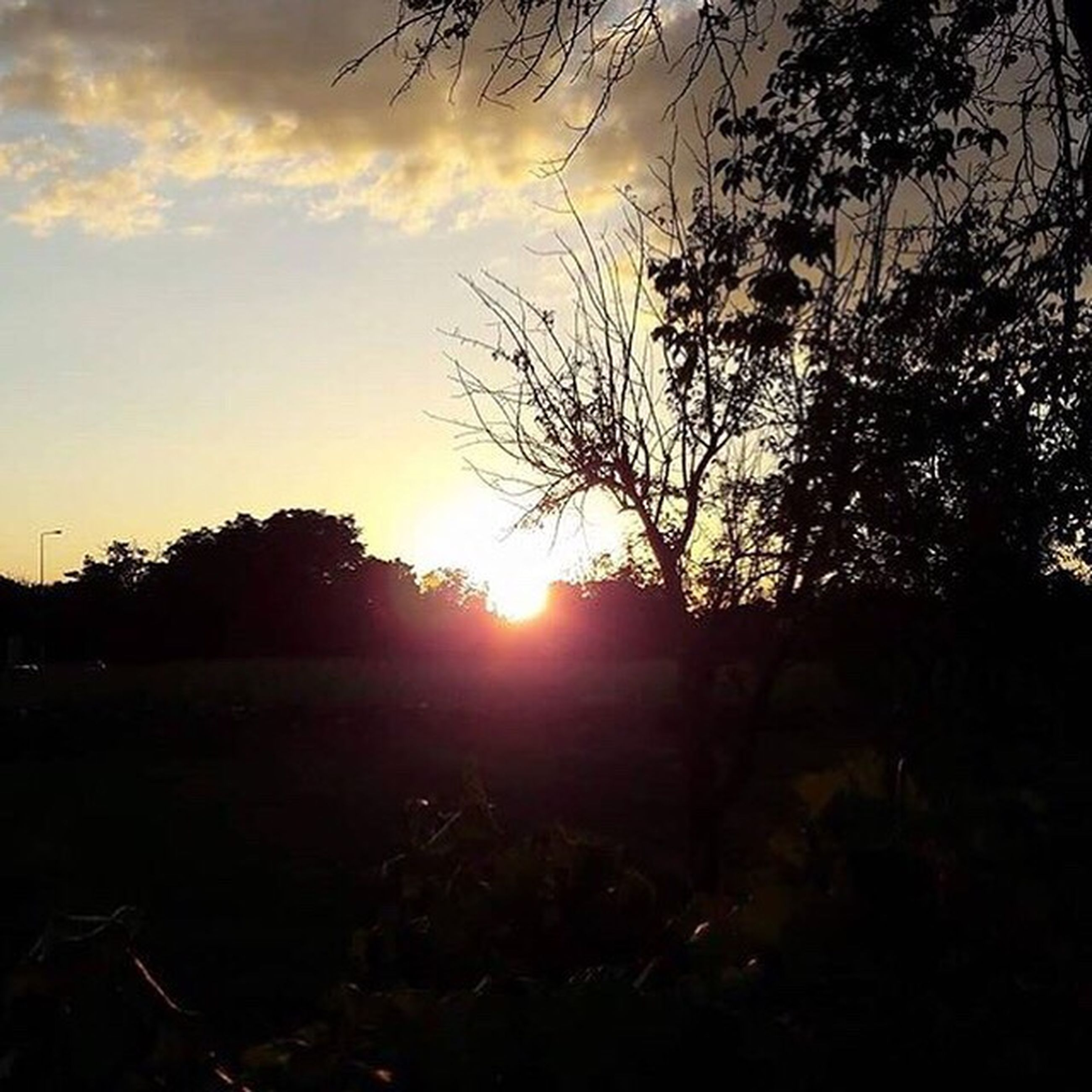 sun, sunset, tranquil scene, tree, scenics, tranquility, silhouette, sunlight, sky, beauty in nature, landscape, field, nature, branch, lens flare, outdoors, growth, non-urban scene, solitude, remote, sunbeam, outline, no people, majestic, vibrant color, cloud - sky