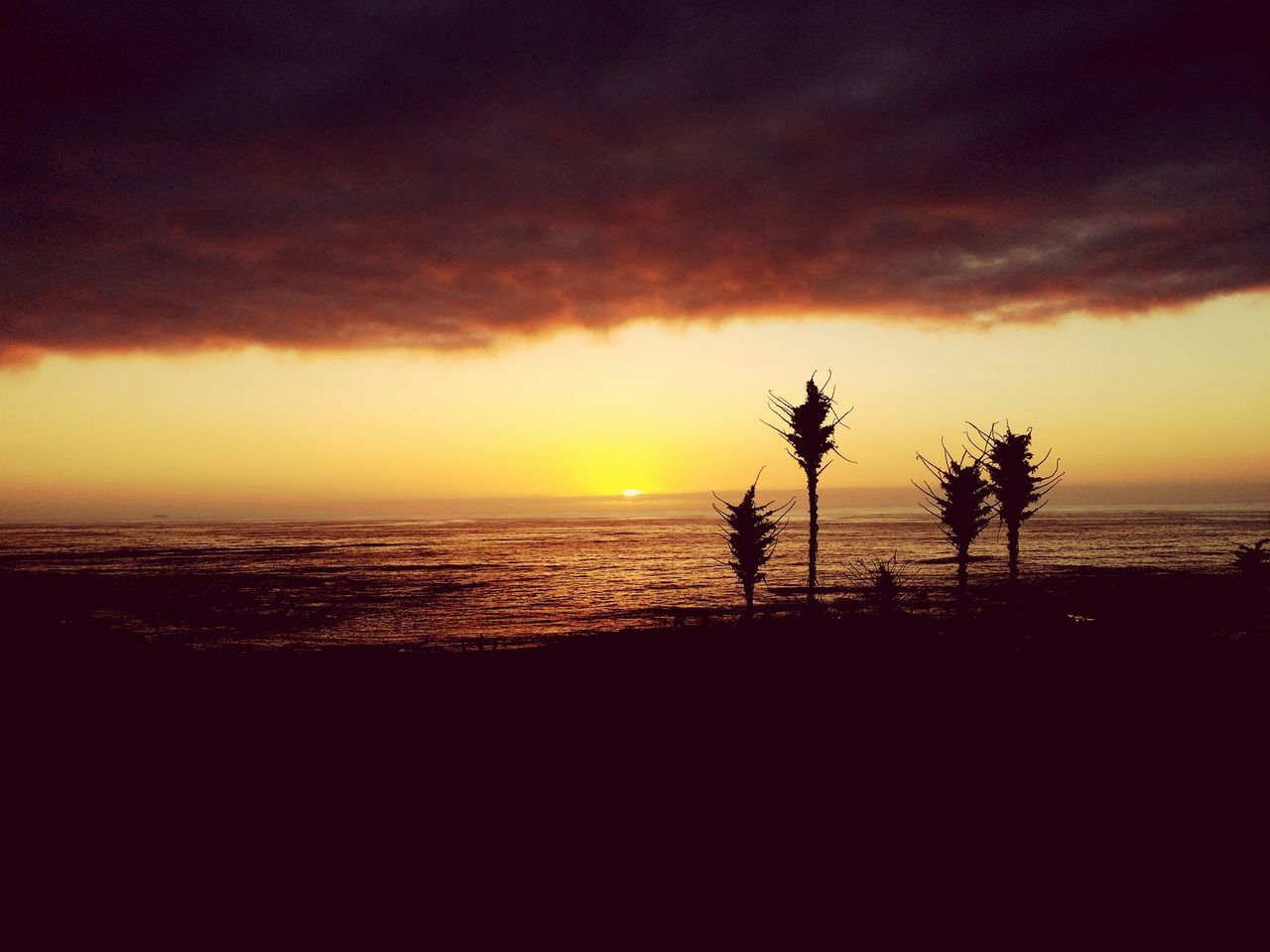 sunset, sea, beach, nature, beauty in nature, scenics, sky, silhouette, tranquil scene, tranquility, cloud - sky, no people, water, outdoors, horizon over water, tree, palm tree
