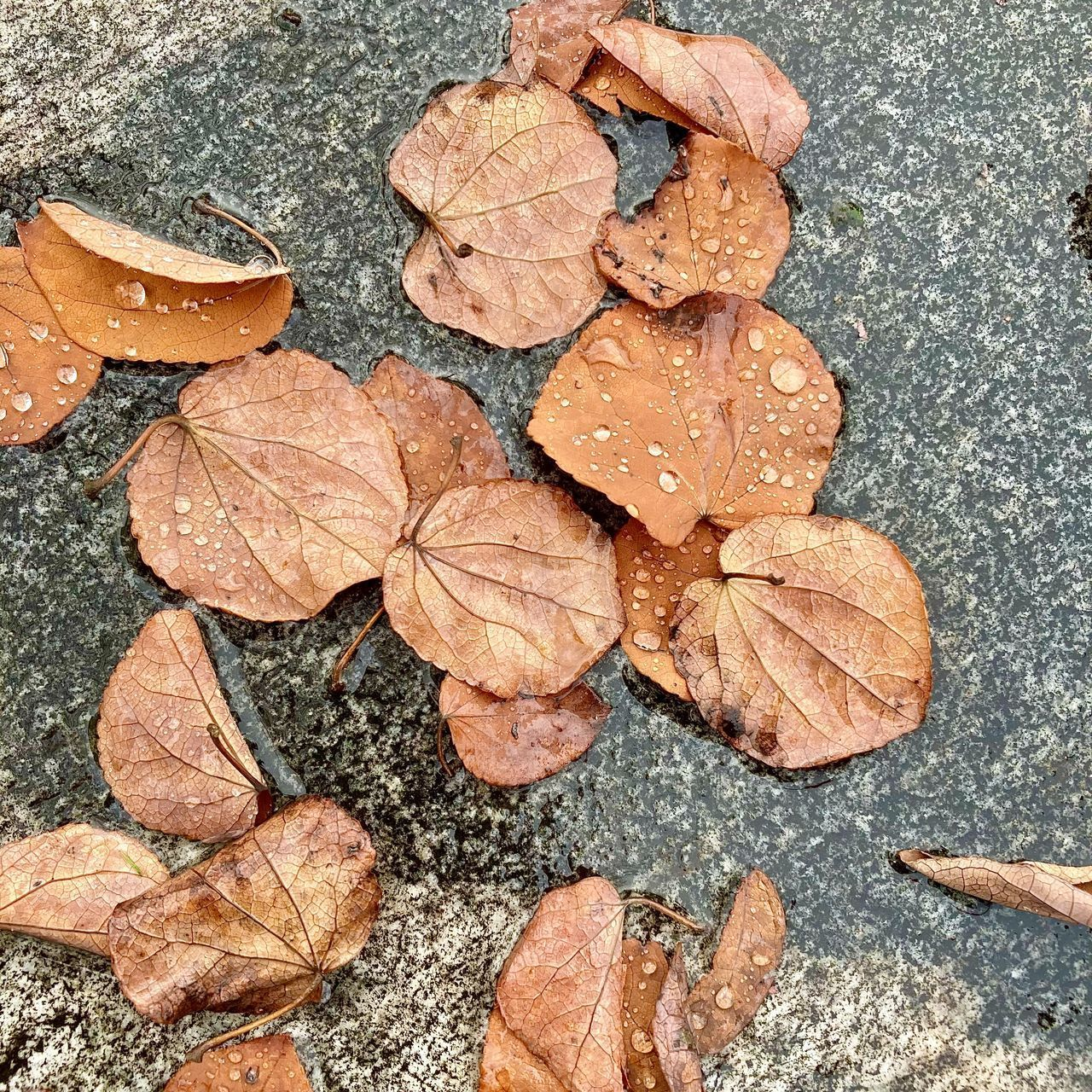 HIGH ANGLE VIEW OF WET DRY LEAVES