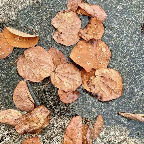 High angle view of dry leaves on wet surface