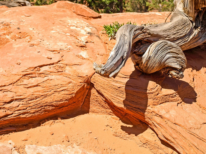 Driftwood on rock