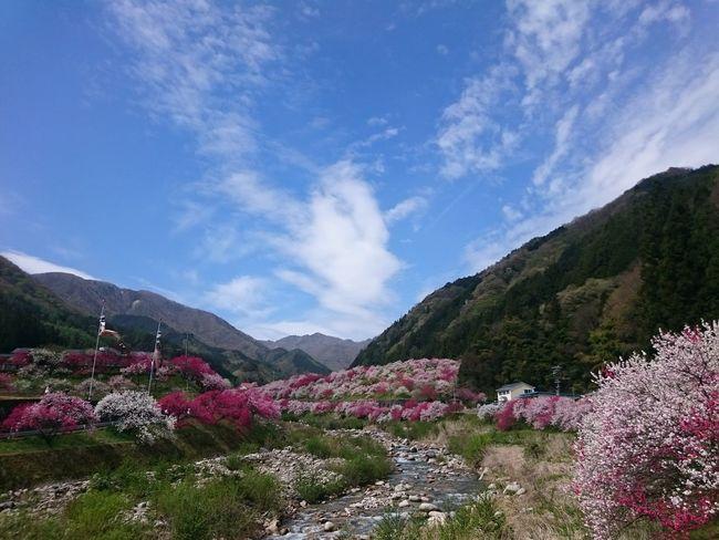 花桃 Flower Tree Nature Mountain Springtime Agriculture Mountain Range Plant Cloud - Sky Blossom Beauty In Nature Landscape Sky Scenics Outdoors Growth Day No People Flower Head Freshness