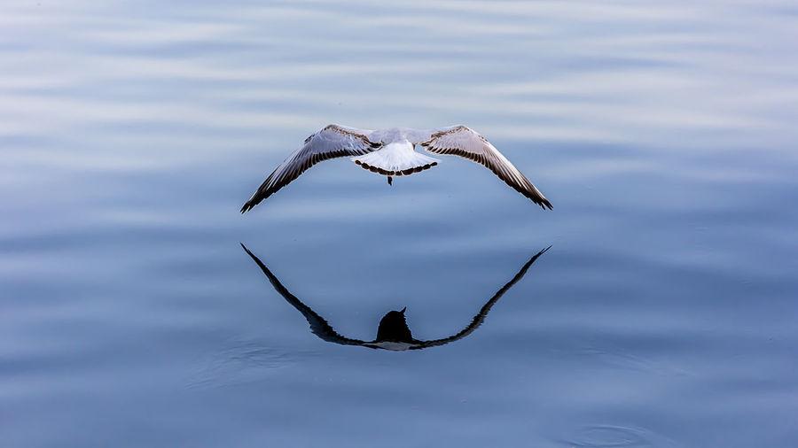 Mirrored Animal
