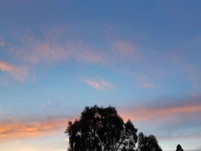 😀 Good Morning World! Happy Wednesday 🇳🇿 New Zealand Early Morning Sky Dawn Light Daybreak Silhouette Photography Autumn 2018 Nature Photography My Autumn In New Zealand Beautiful Nature Skyporn Have A Marvelous Day😀 Welcome Wednesday😀 Sunrise Sunrise Silhouette Sunrise - Dawn Sunrise Colors Happy Humpday  Tree Silhouette Sky Cloud - Sky Treetop Tree Area Single Tree