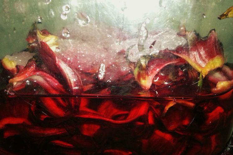 Rượu Hoa bụt giấm ủ ngày thứ 1