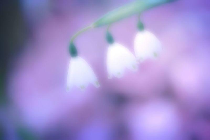 鈴蘭水仙 Colors Spring Time Spring Colours Flowers Flower Collection Spring 春 Bokeh Airy Airy Flowers Hazy  EyeEm Flower 水仙