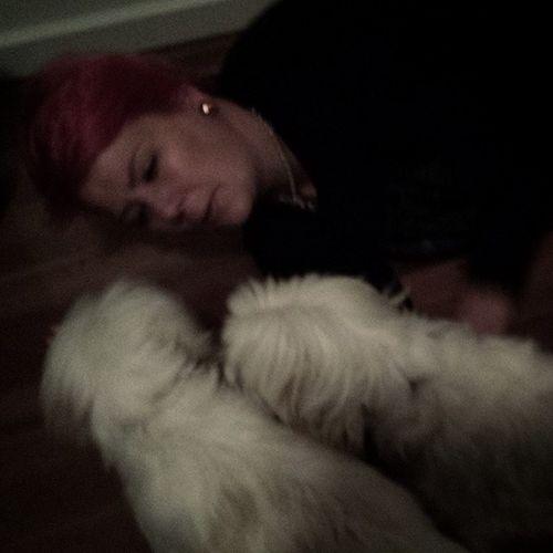 Thedogwhisperer Maltesetwins