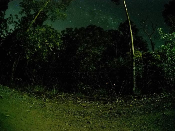 Darkness Night Stars Growth Tree Green Color Nature Outdoors Tranquility Tranquil Scene Beauty In Nature Grass No People Scenics Astronomy Shinebright Beautiful Peaceful Forest Night Forest Spooky Nightsky Night Shot