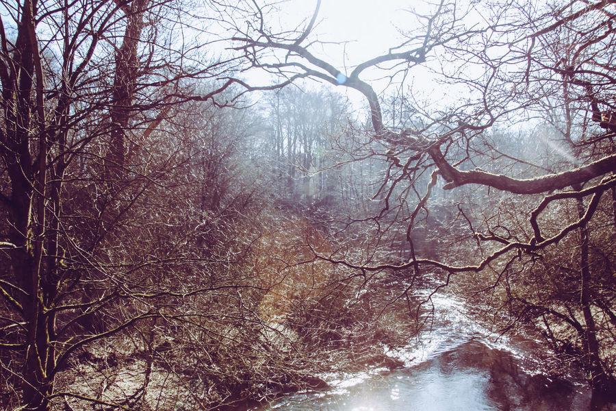 Alstertal Bare Tree Beauty In Nature Branch Day Forest Growth Light And Shadow Lonliness Nature No People Outdoors River Scenics Silence Sky Sunbeam Sunshine Tranquility Tree Valley Water Water Reflections Winter