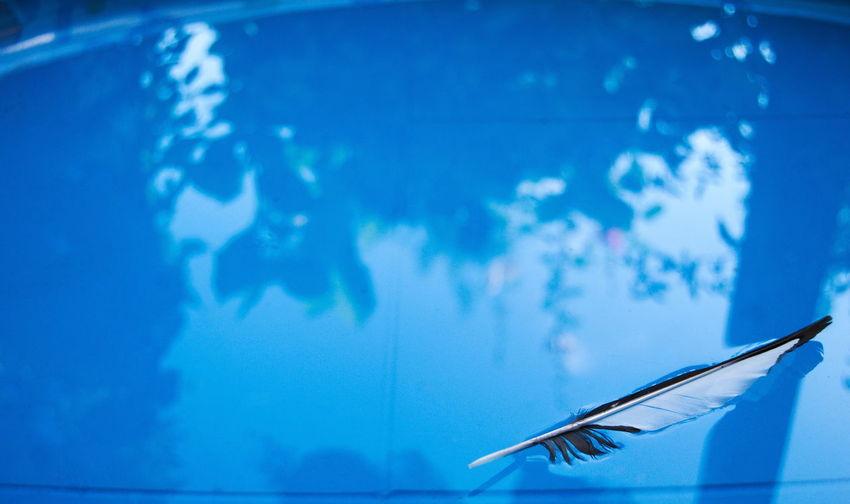 Catchy Color Blue Water Feather  No People White Black Feder Germany Outdoors Pool Planschbecken Color Palette Ansicht Von Oben Auf Dem Wasser Treiben Blau Farbbild Focus On Foreground Horizontal Schwimmbecken Schöne Natur View From Above
