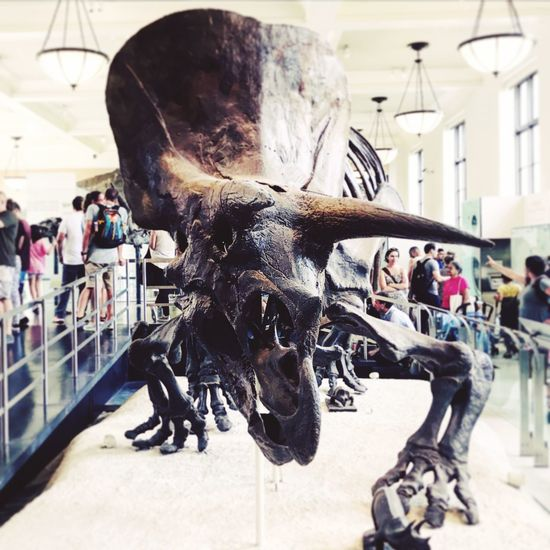 Triceratops Dinosaur Skeleton Natural History Museum Museum Built Structure Architecture Men Museum Indoors  Day Large Group Of People Close-up Real People An Eye For Travel EyeEmNewHere