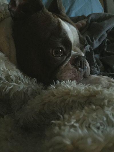 Mojo!❤️ Deep Thoughts