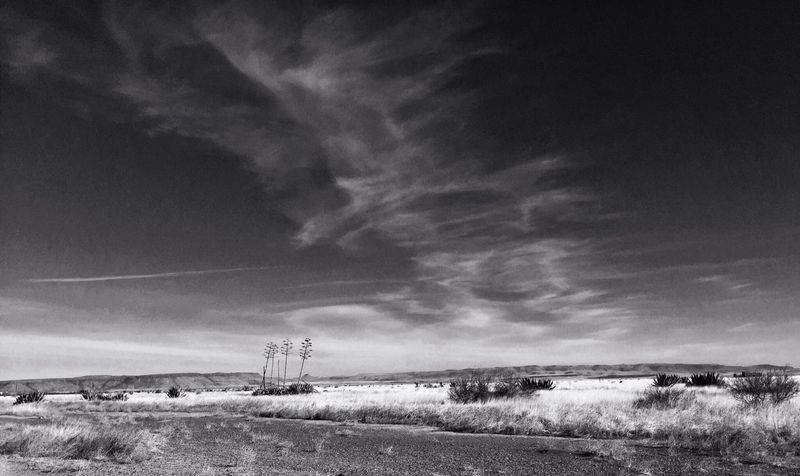Sky Landscape No People Nature Field Tranquility Tranquil Scene Outdoors Rural Scene Day Beauty In Nature Scenics Texas Landscape Texas Sky Davis Mountains Agave Plant Monochrome Photography Breathing Space