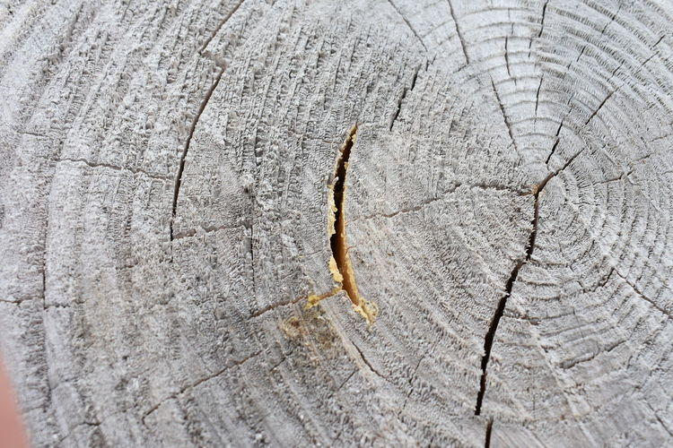 Beautiful Nature Tree Trunk Animal Animal Themes Animal Wildlife Animals In The Wild Bark Beauty In Nature Close-up Cracked Cute Cuted Tree Day Forest Full Frame Grain Grey Invertebrate Macro Nature No People One Animal Outdoors Pattern Rings Rough Structure Textured  Tree Tree Ring Tree Stump Wood - Material
