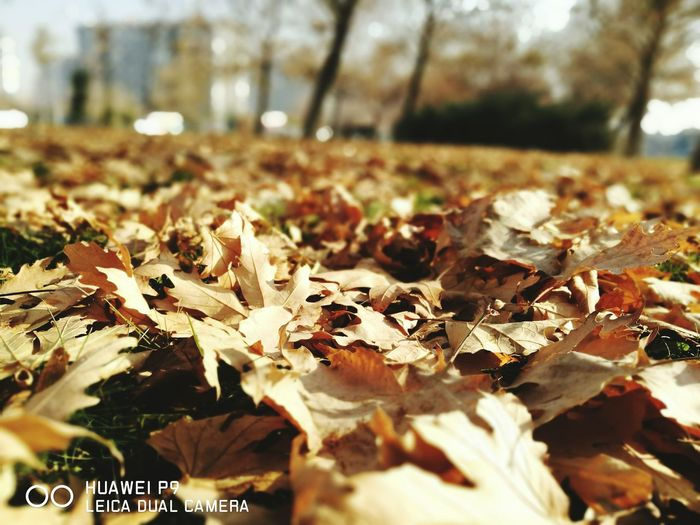 Autumn Nature Outdoors Day Sunlight Leaf Change No People Beauty In Nature