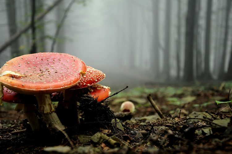 Forrest Woods Shrooms Fog Foggy Nature Nature_collection