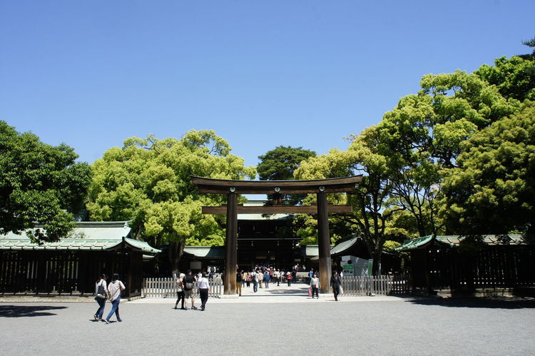 Shrine Temple Japanese Temple Clear Sky Nofilter Nofilters Noedit No Filter Clear Blue Sky Sunny Japan Photography Japanese  Japan Japan Photos Meiji Shrine Meiji Jingu Meijishrine TORII Torii Gate Japanese Style Trees Meiji-Jingu Japanese Shrine
